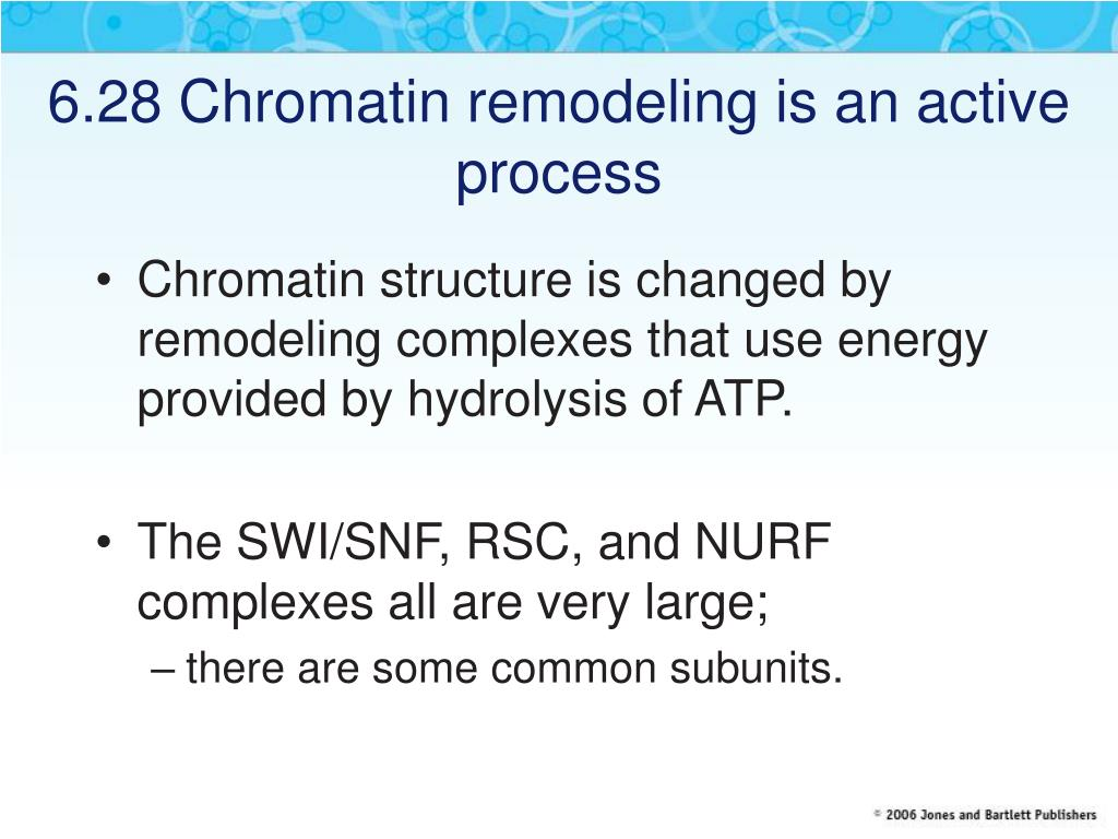 6.28 Chromatin remodeling is an active process