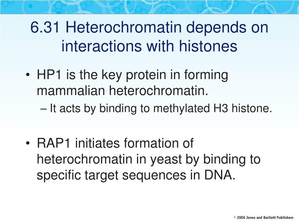 6.31 Heterochromatin depends on interactions with histones
