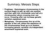 summary meiosis steps