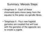 summary meiosis steps19