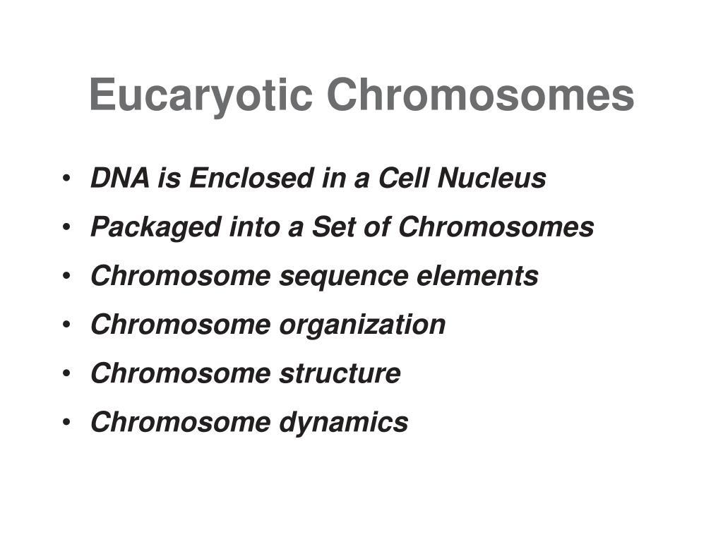 eucaryotic chromosomes l.