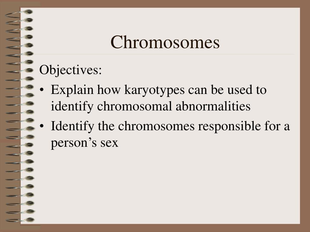 chromosomes l.