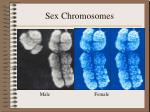 sex chromosomes14