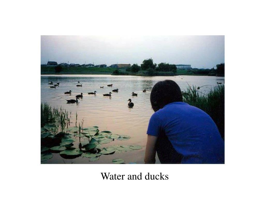 Water and ducks