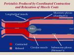 peristalsis produced by coordinated contraction and relaxation of muscle coats