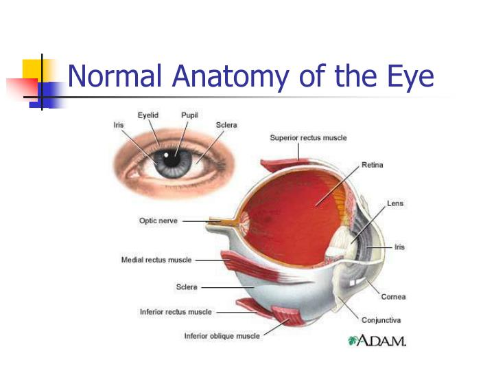 Ppt Eye And Ear Assessment Powerpoint Presentation Id399314