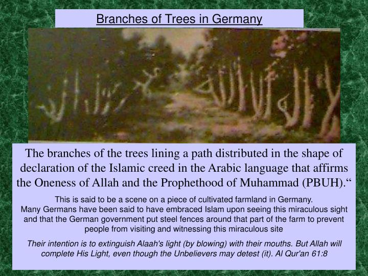Branches of Trees in Germany