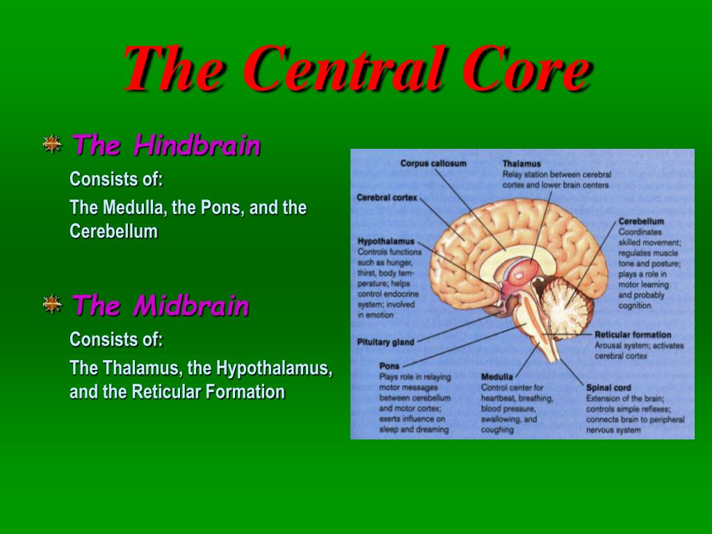 The Central Core