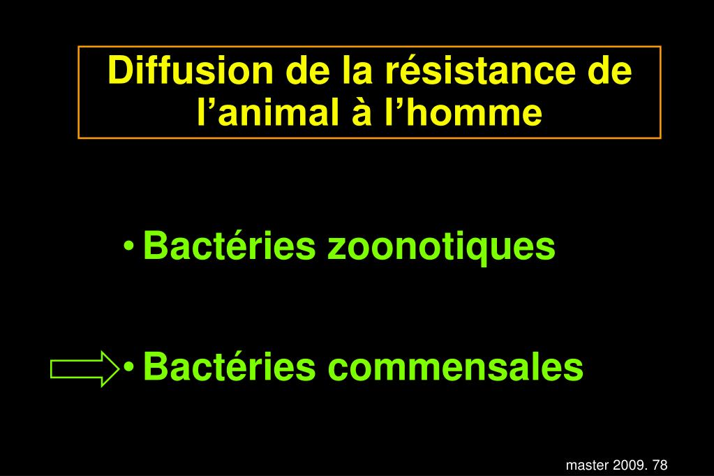 Diffusion de la résistance de l'animal à l'homme