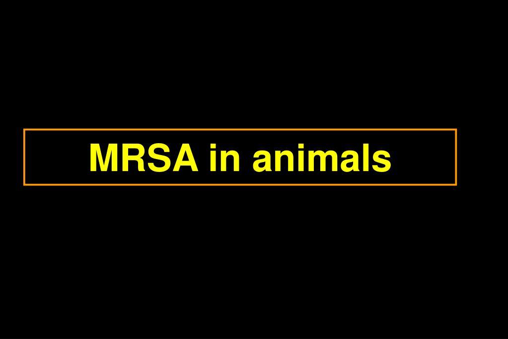 MRSA in animals