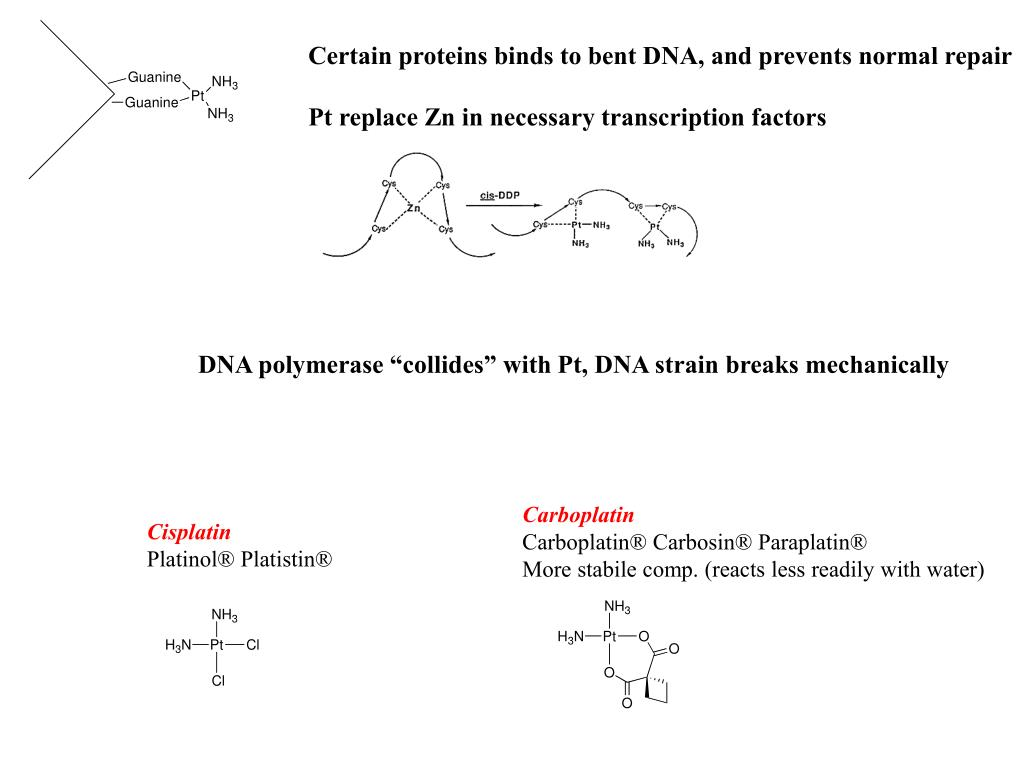 Certain proteins binds to bent DNA, and prevents normal repair