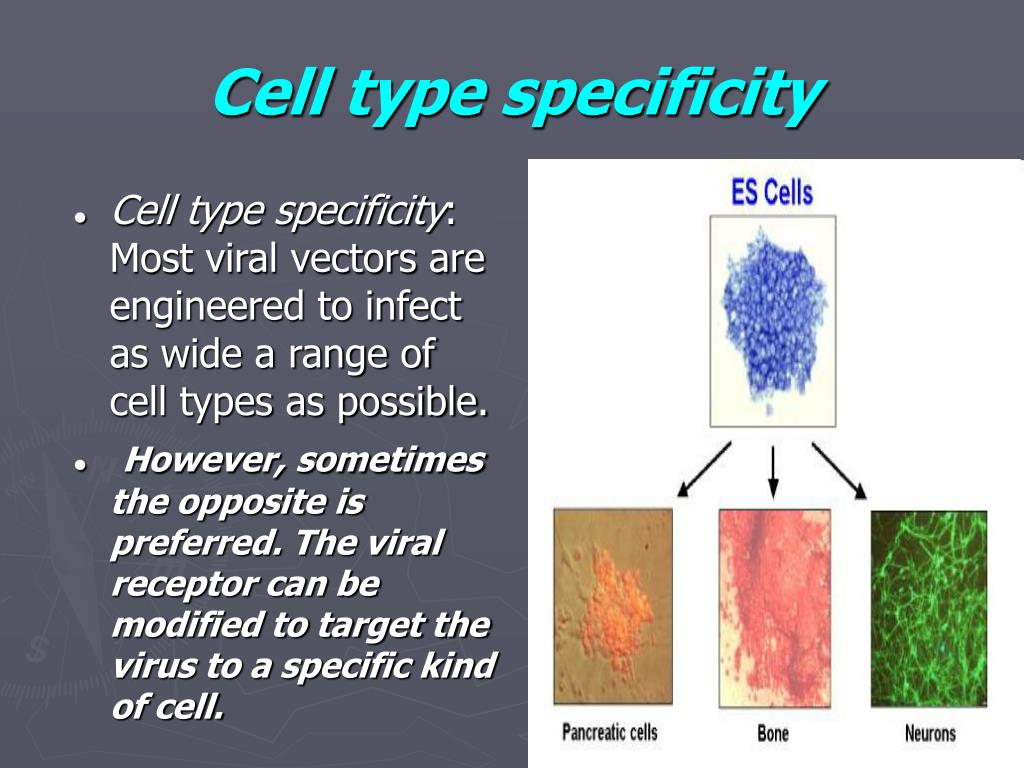 Cell type specificity
