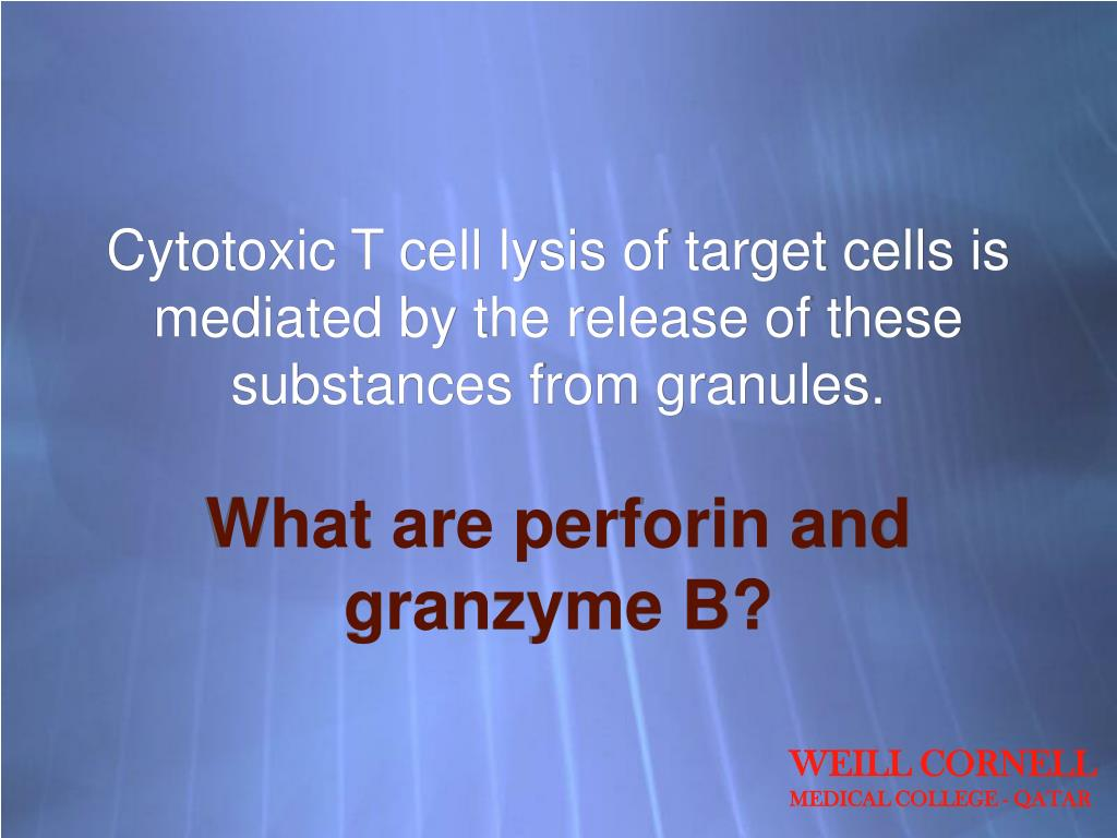 Cytotoxic T cell lysis of target cells is mediated by the release of these