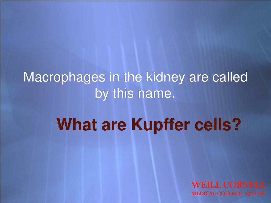 Macrophages in the kidney are called by this name.