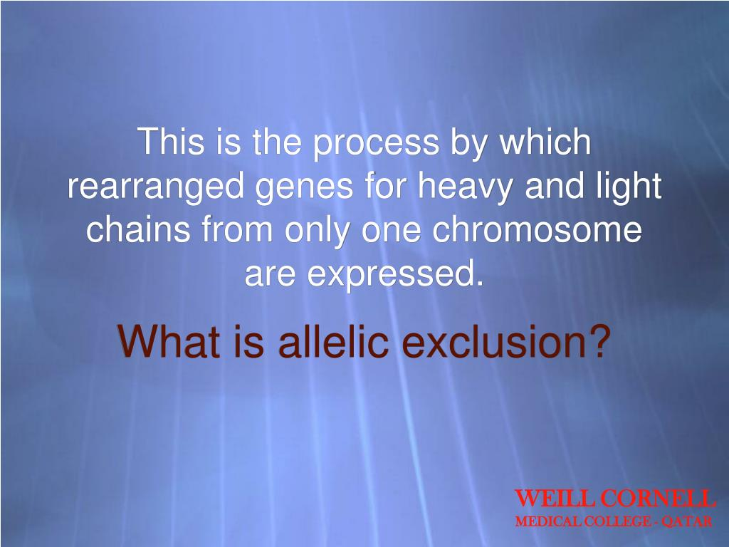 This is the process by which rearranged genes for heavy and light chains from only one chromosome are expressed.