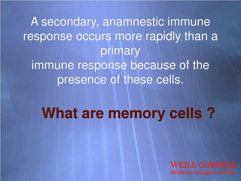 A secondary, anamnestic immune response occurs more rapidly than a primary