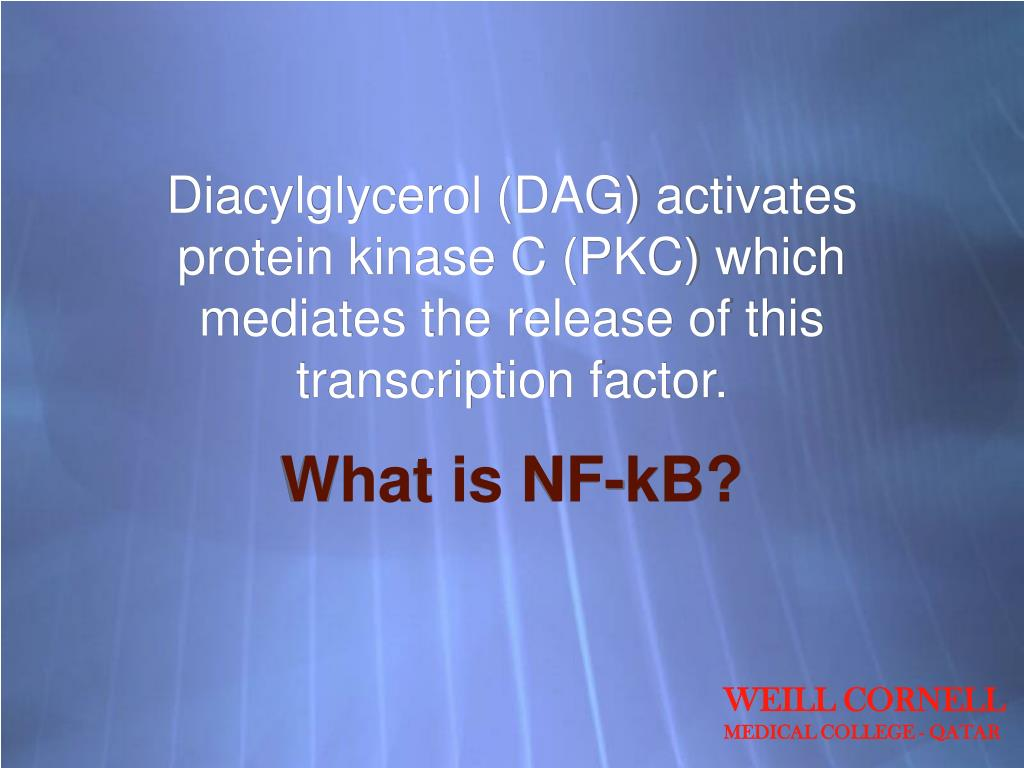 Diacylglycerol (DAG) activates protein kinase C (PKC) which mediates the release of this transcription factor.