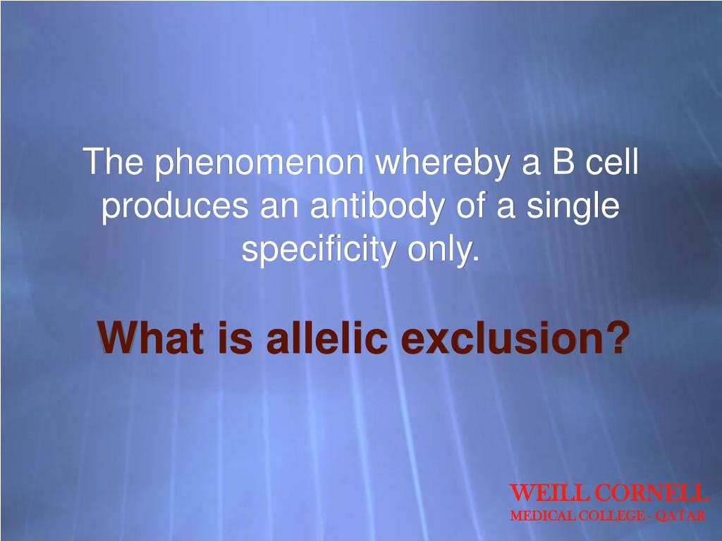 The phenomenon whereby a B cell produces an antibody of a single