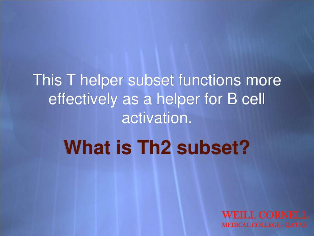 This T helper subset functions more effectively as a helper for B cell activation.
