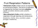 fruit respiration patterns