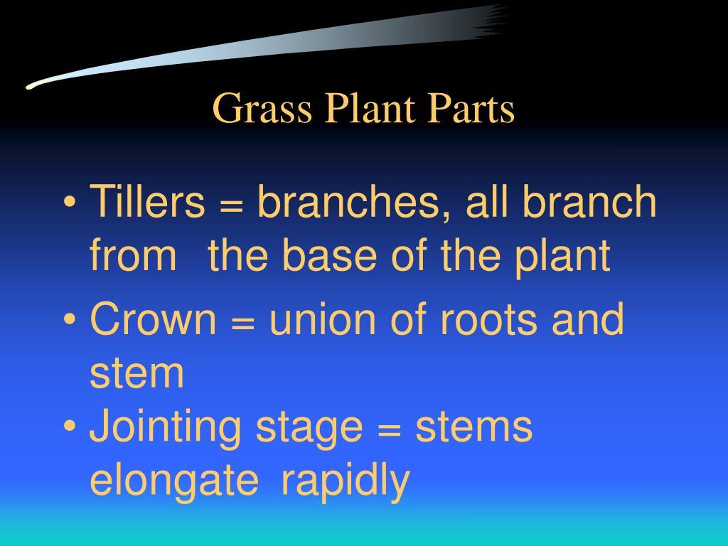 Grass Plant Parts