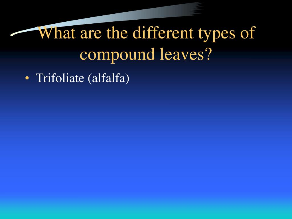 What are the different types of compound leaves?