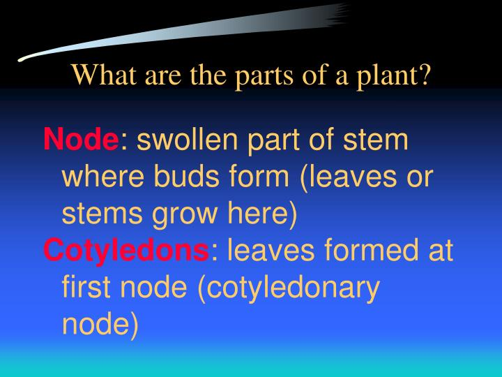 What are the parts of a plant