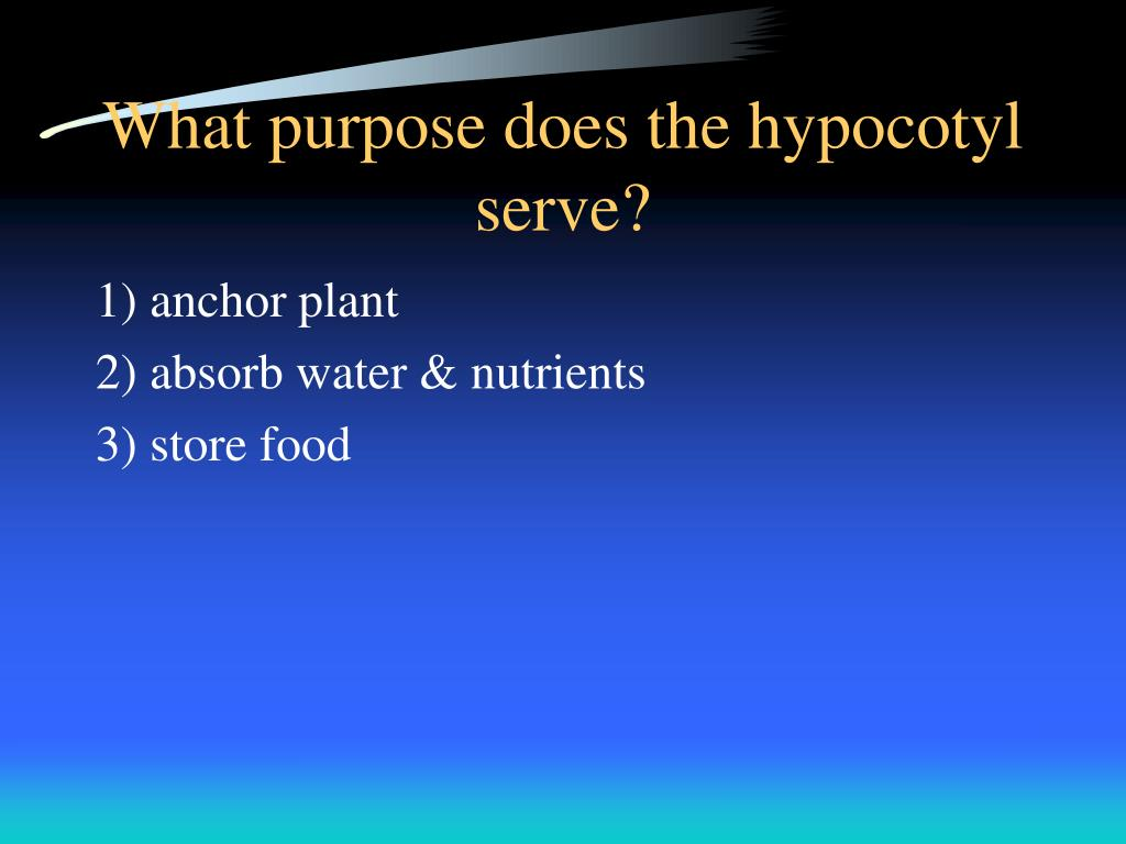 What purpose does the hypocotyl serve?