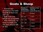 goats sheep