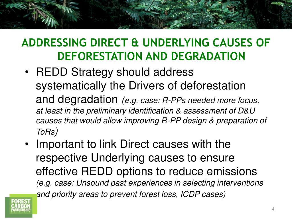 REDD Strategy should address systematically the Drivers of deforestation and degradation