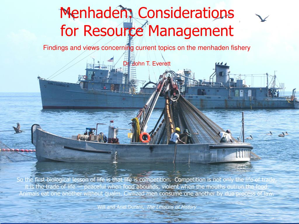 menhaden considerations for resource management l.