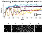 monitoring dynamics with single cell resolution