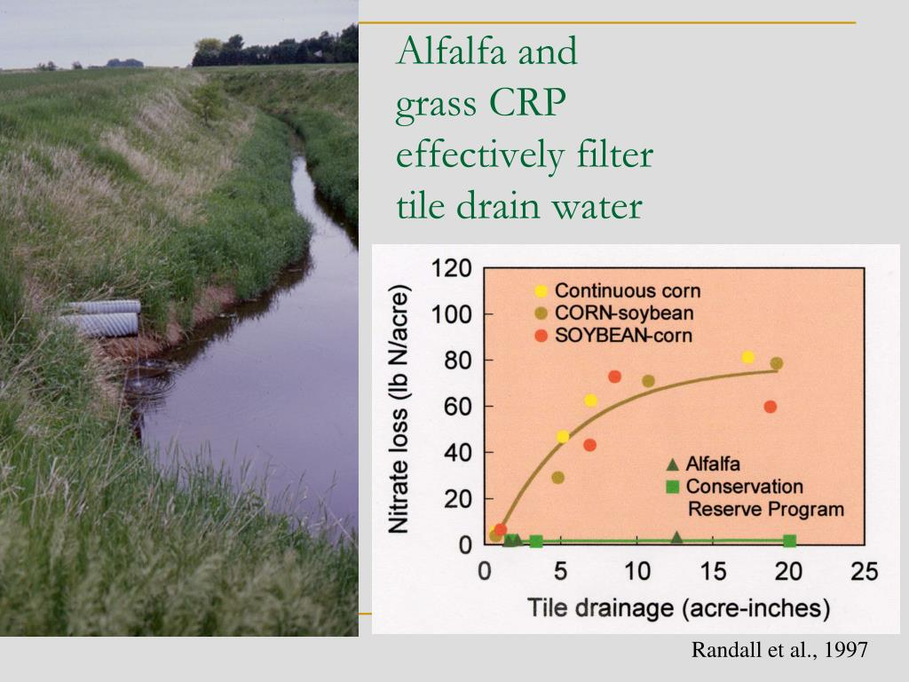 Alfalfa and