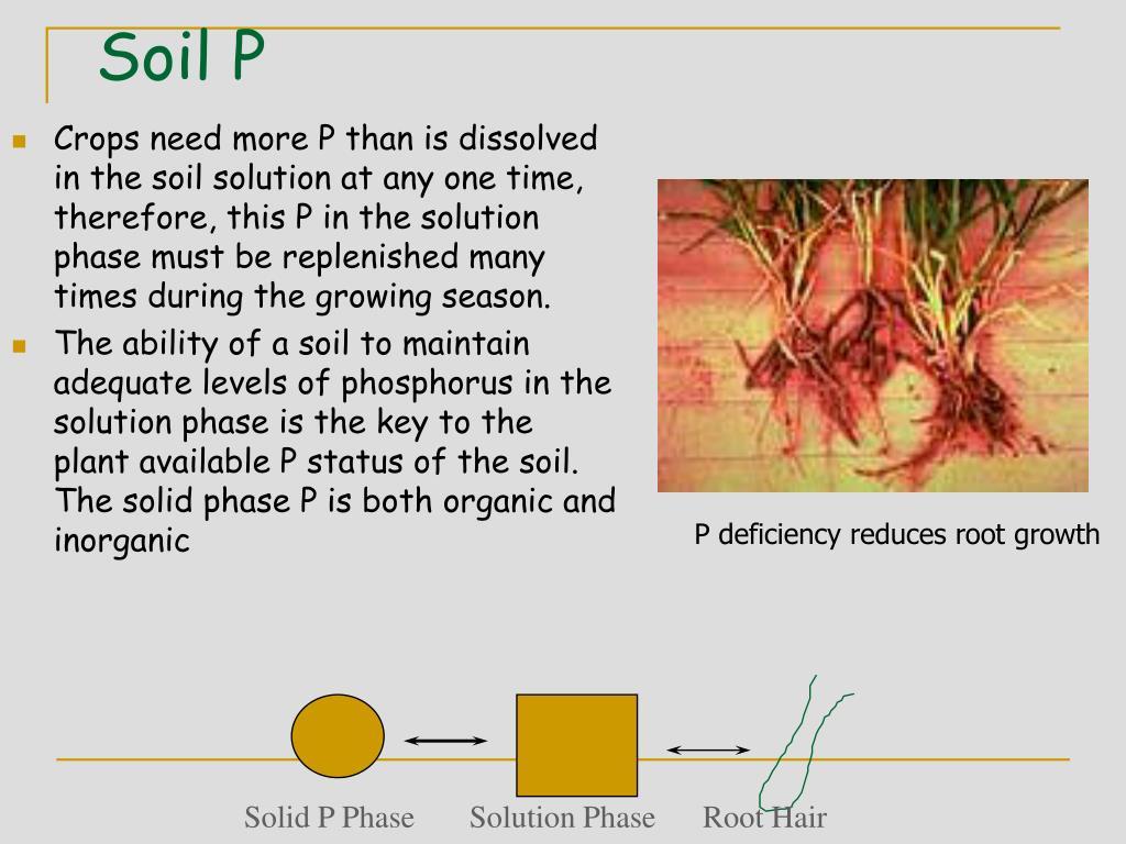 Soil P