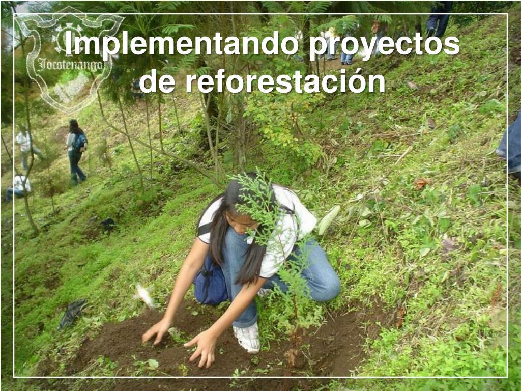 Implementando proyectos de reforestación