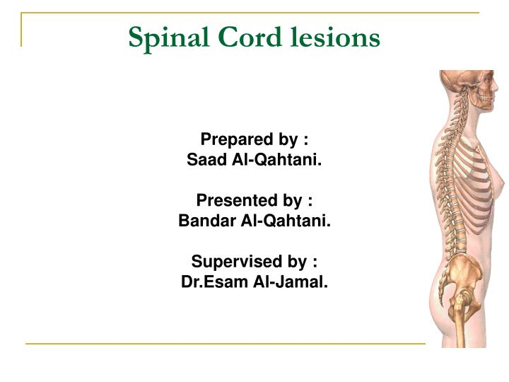 spinal cord lesions n.