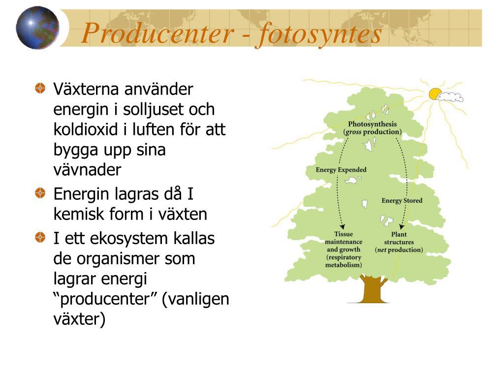 Producenter - fotosyntes