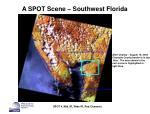 a spot scene southwest florida
