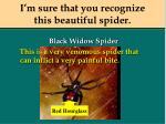 i m sure that you recognize this beautiful spider