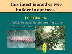 this insect is another web builder in our trees