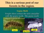 this is a serious pest of our forests in the region