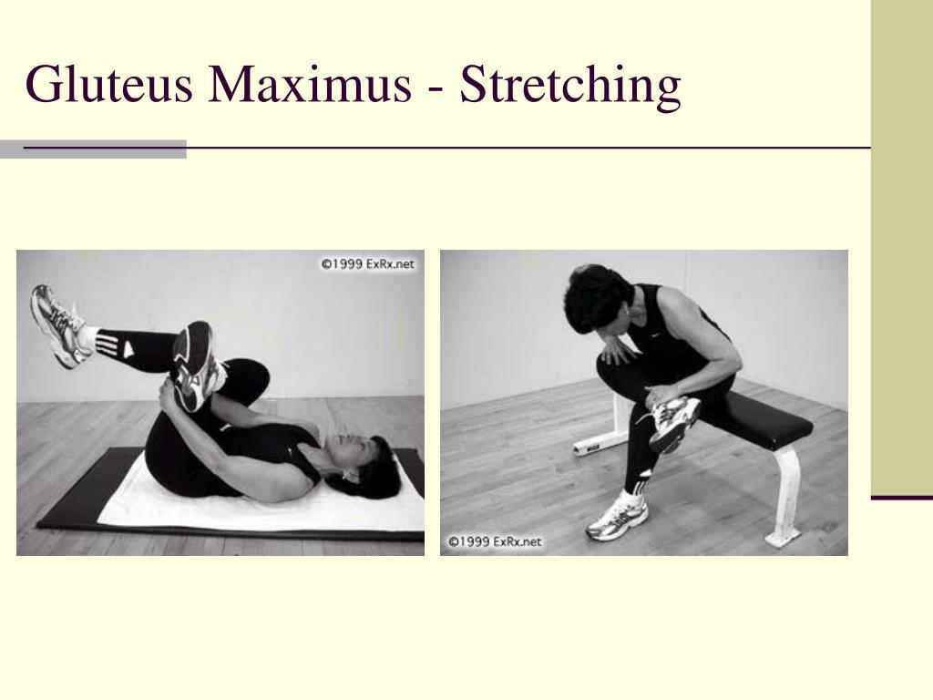 Gluteus Maximus - Stretching