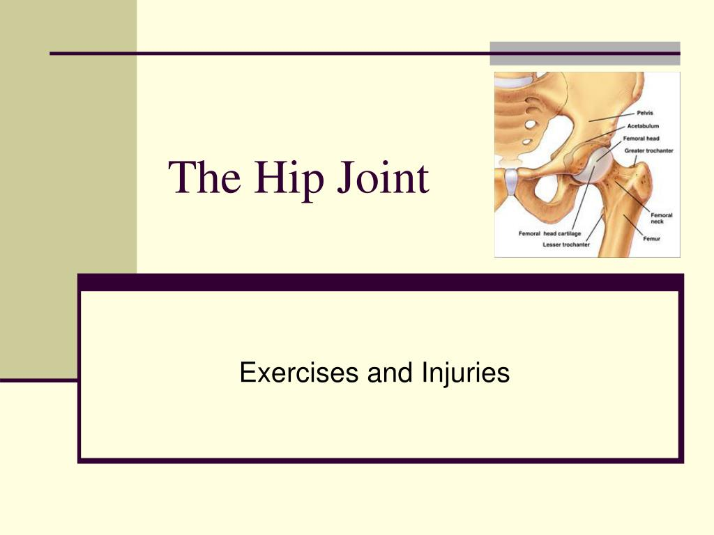the hip joint l.