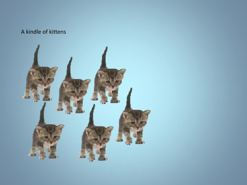 A kindle of kittens