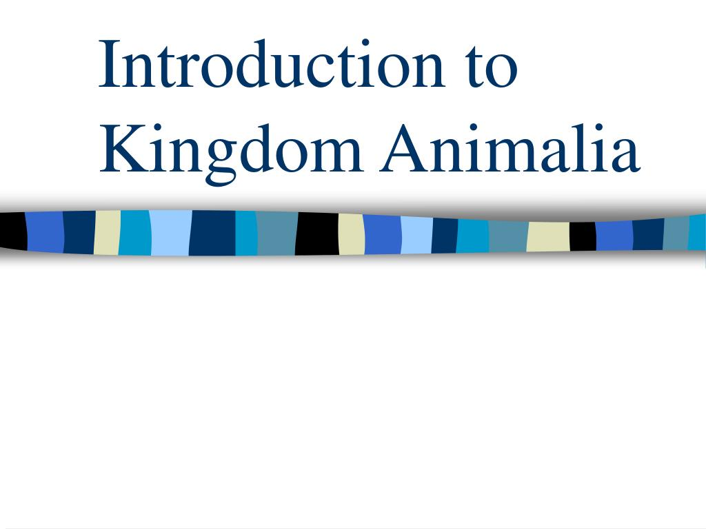 introduction to kingdom animalia l.