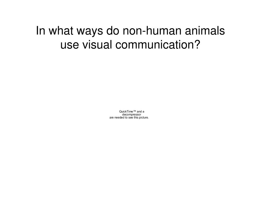 In what ways do non-human animals use visual communication?