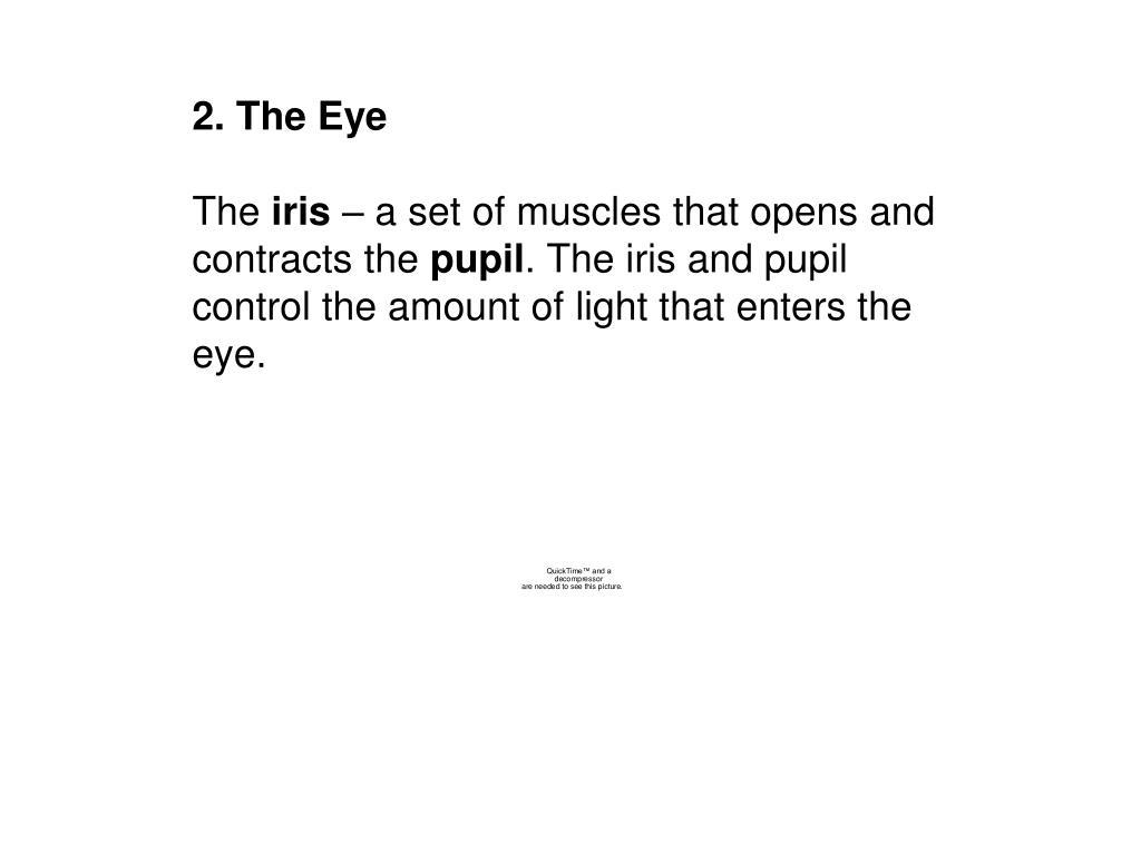 2. The Eye