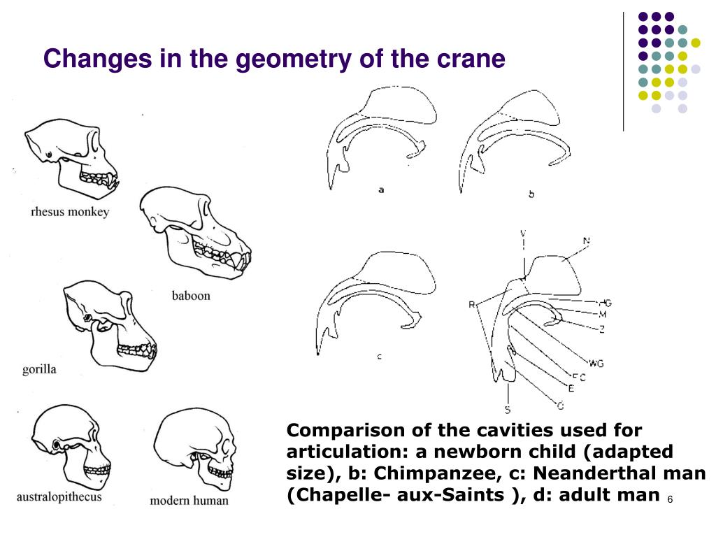 Changes in the geometry of the crane