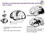 evolution of cerebral areas and blood flow while words are seen or heard