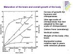 maturation of the brain and overall growth of the body